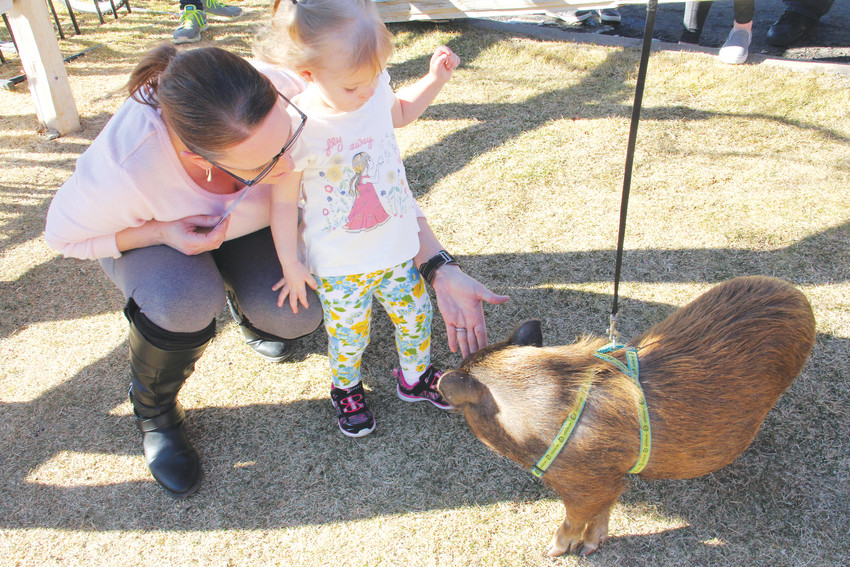 Tara Vaughn, left, and 2-year-old Teagan Widby say hello to Katniss Eversqueal, a rescued pot-bellied pig, at a Hog Haven Farm event at Resolute Brewing Company in Centennial March 3. Hog Haven Farm is a Colorado-based nonprofit that rescues pigs from situations of abuse and neglect to find them homes or offer them sanctuary.