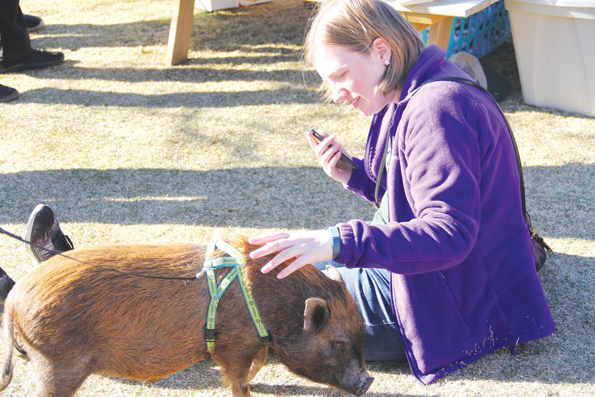 Tracy Schantz, 31, pets Katniss Eversqueal at a Hog Haven Farm event at Resolute Brewing Company March 3. Schantz is looking to get a pet pig in the future.