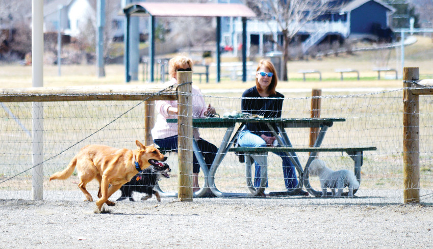 Two dogs, on either side of a fence, race each other at March 24 Thornton's  Trail Winds Dog Park. The city is relocating the dog park to make room for a new recreation center and is taking public input on what the park should look like.