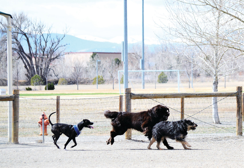 A trio of dogs make their way around their enclosure March 24 Thornton's Trail Winds Dog Park. The city is relocating the dog park to make room for a new recreation center and is taking public input plans for a the interim park and location and plans for a permanent replacement.