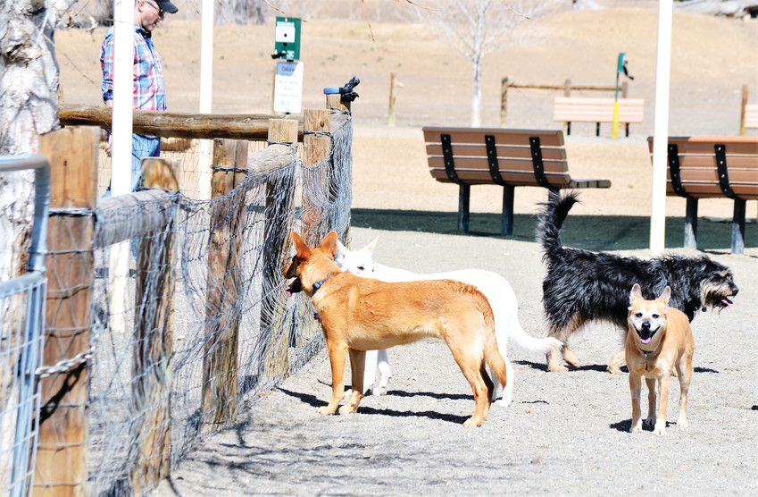 Pups congregate March 24 at Thornton's Trail Winds Dog Park. The city is relocating the dog park to make room for a new recreation center and is taking public input on what the park should look like.