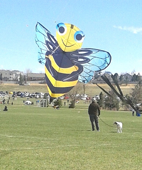 That's no giant bee, but a very distinctive kite that was being flown at this year's kite fest.