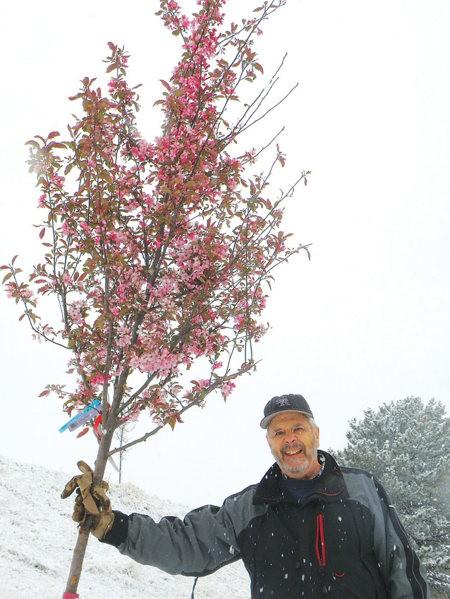 Crabapple Route president Larry Borger stands beside a yet-to-be-planted crabapple tree on West Jamison Avenue on April 21. Most of the seven-mile route is at capacity for trees, Borger said, so he's fanning out to the rest of Littleton.
