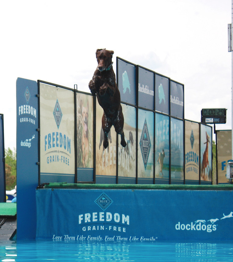 A Thorntonfest dog prepares for splashdown during the DockDog competition during the 2016 festival. The festival continues in 2018 with dock jumping and frisbee competitions for dogs and a low cost pet clinic.