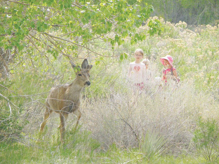 Kids watch a deer near the Audubon Center at the south end of Chatfield State Park.