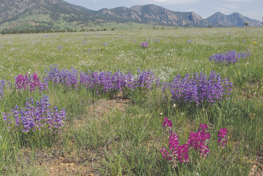 Expected to boast about 5,000 acres and about 20 miles of trails, Rocky Flats National Wildlife Refuge will feature an abundance of wildlife and plant viewing.