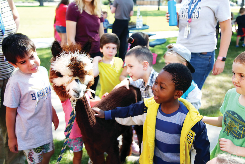 The young alpaca, Indie, was the favorite animal by many of the incoming kindergarten students.