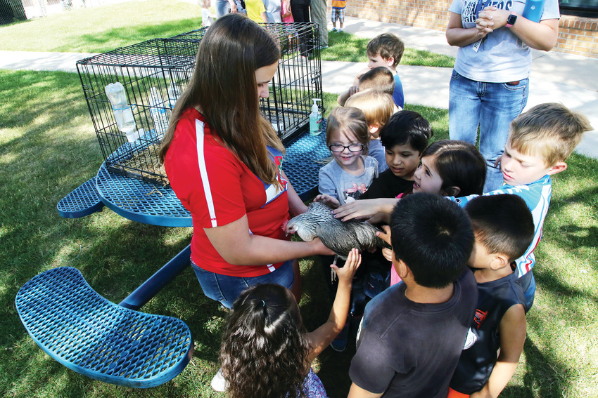 Incoming kindergarten students in the Parr Elementary School early learning summer program got a hands-on day with 4-H animals.