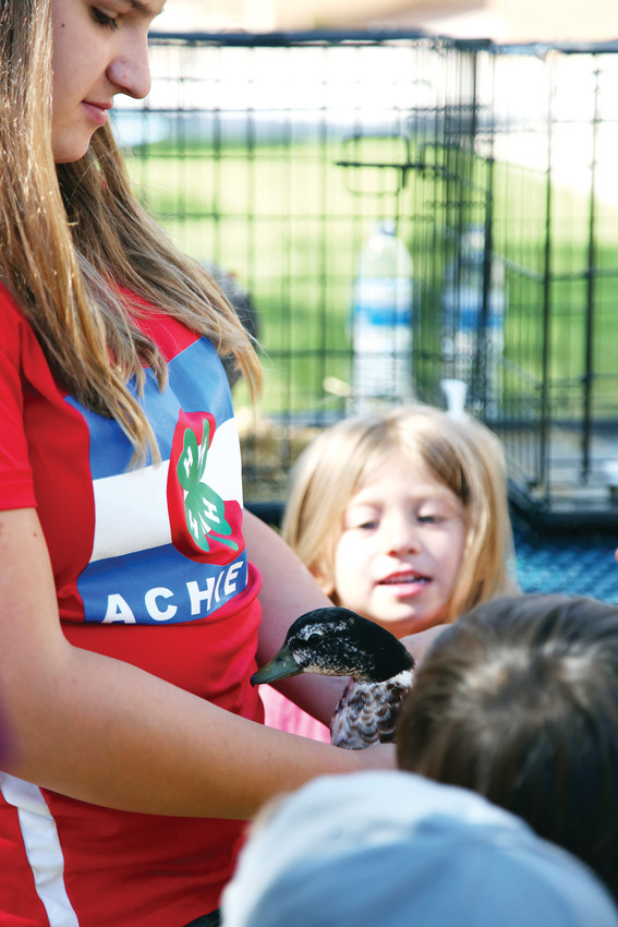 Ducks, chickens, rabbits and an alpaca were among the animals brought by local 4-H students.
