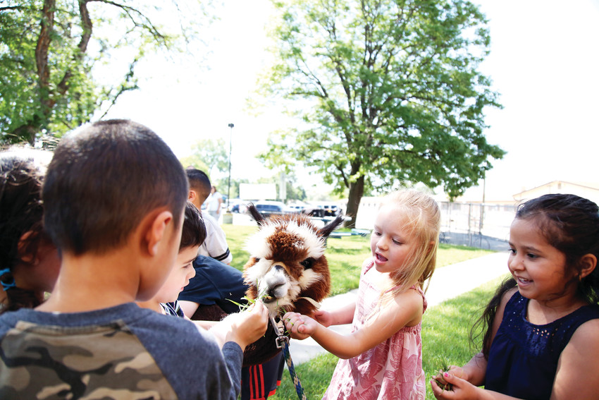 Parr Elementary summer of early learning students feed Indie, a young alpaca, during animal day on June 27.
