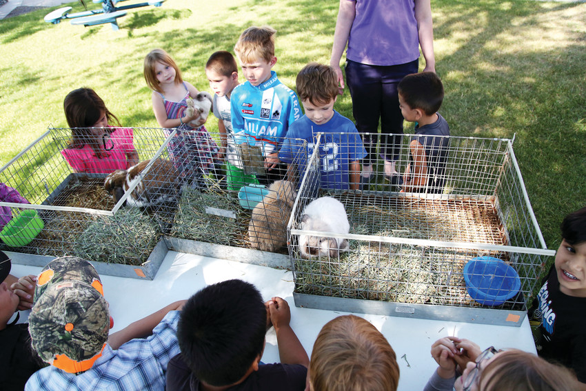 The 4-H animal day was part of a non-fiction immersion in which students are currently reading about animals.