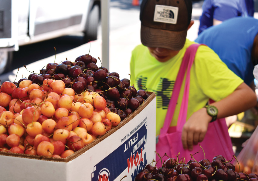 A young customer carefully selects Colorado cherries at the Arvada Farmers Market.