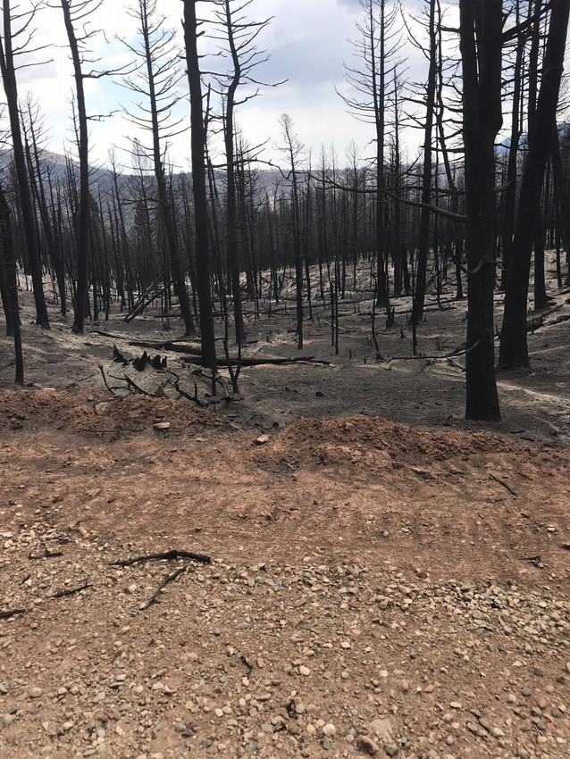 This photo taken near the property of Jim and Kim Liberatore shows a glimpse of the Spring Creek fire's aftermath in the Paradise Acres subdivision.