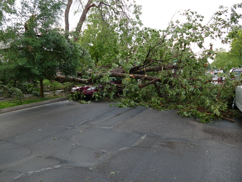 A pine tree in the 4100 block of South Sherman Street fell onto Alexandra Myers' car during the Tuesday night storm, which brought gale-like winds, hail and flooding to parts of Englewood and the south metro area. Myers, who lives in Kansas, was visiting her sister.