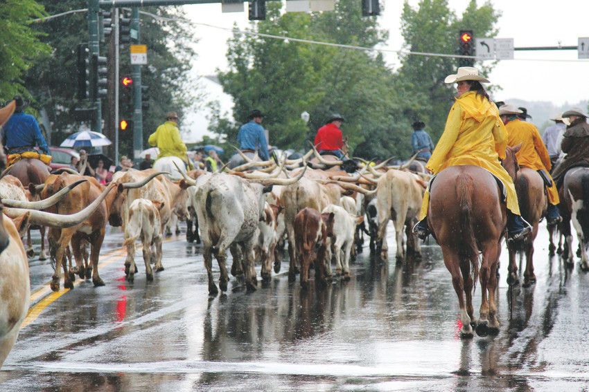 At left, the drive starts at Red Rock Park and moves down Perry Street, ending at Festival Park where the cattle are corralled for people to see up close.