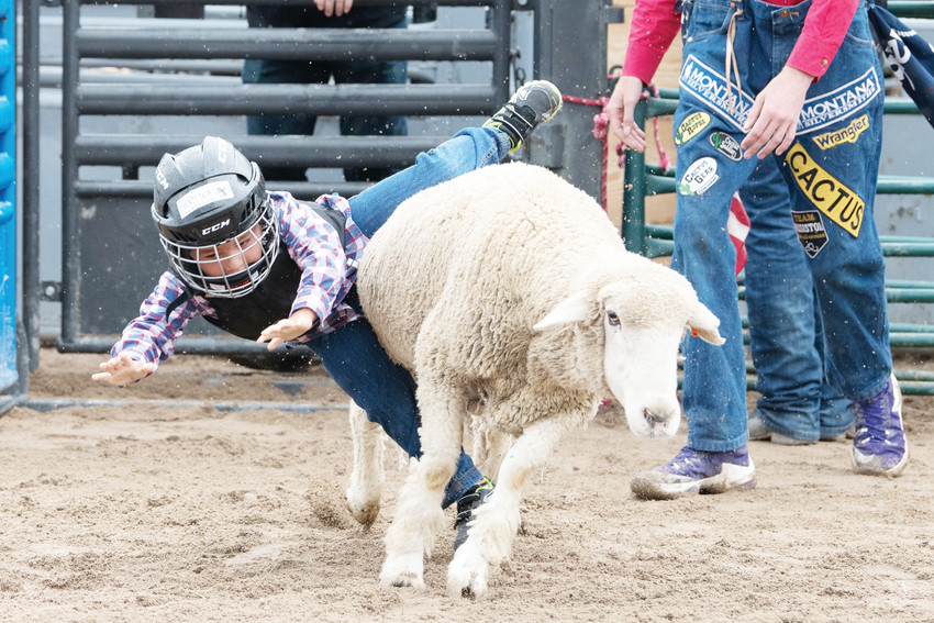 Henry Krier, 5, of Lone Tree, shows his mutton-busting skills on Aug. 3 during the Douglas County Fair and Rodeo.