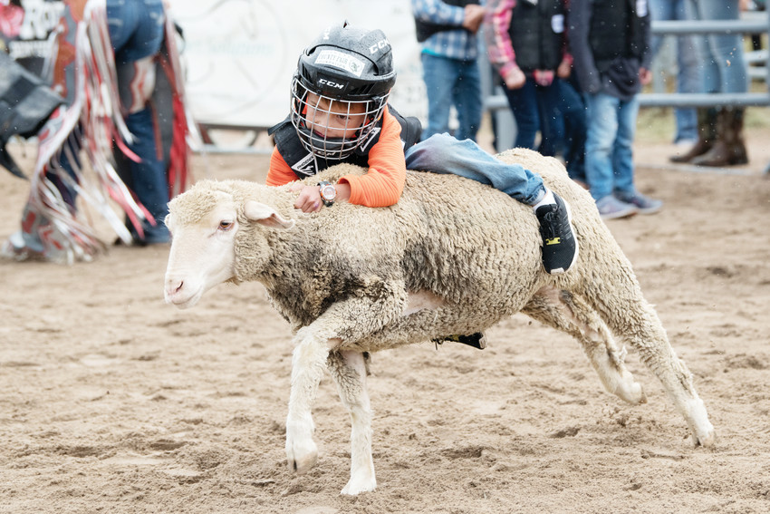 Noah Vanhorn, 6, of Castle Pines shows his mutton-busting skills, racking up a first-round score of 91.