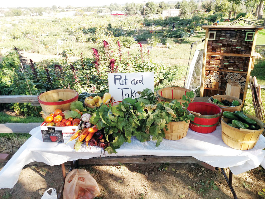A put-and-take table will be set up at the Arvada Community Garden open house from 10 a.m. to 2 p.m. Saturday, Aug. 18. Gardeners can bring items they grew to put on the table, then take an item that someone else left.