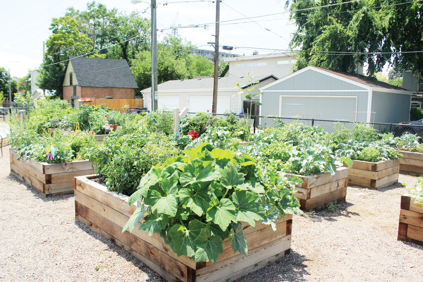 Metro Caring converted its garden space into individual plots to help teach people gardening skills. People using Metro Caring for food every week can sign up for a garden and grow whatever they want.