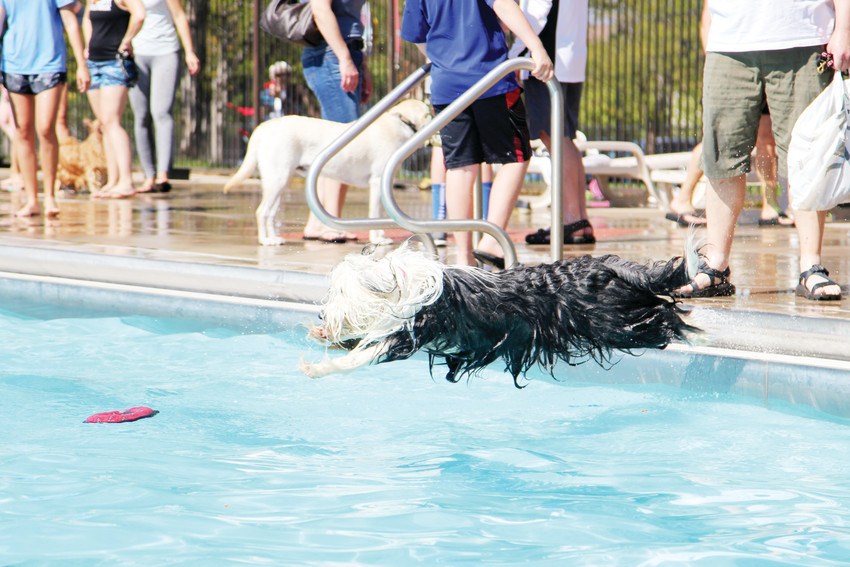 Dogs jumped into the pool without showing signs of getting tired.