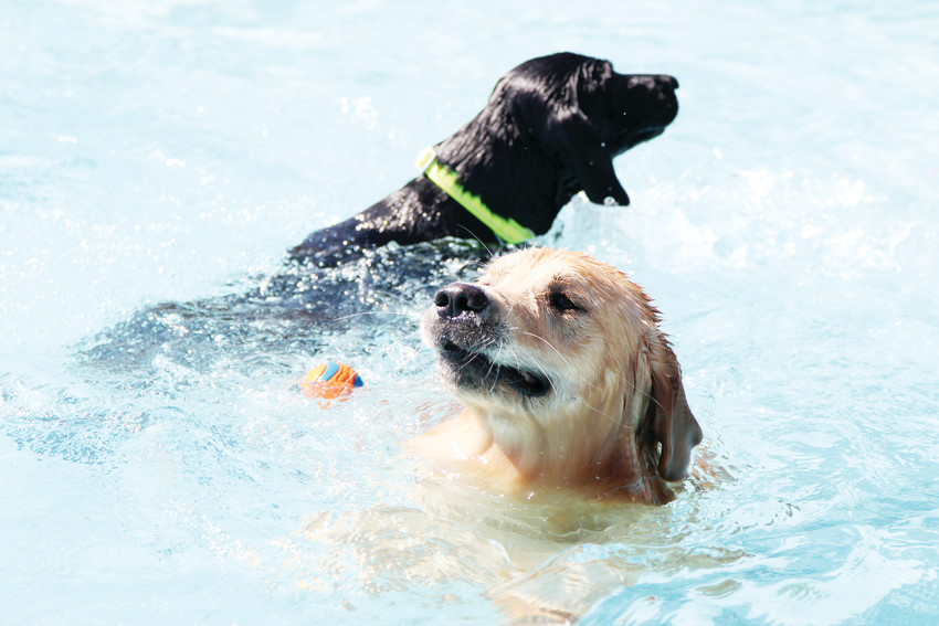 "The event opens up the Butterfield Crossing swimming pool for a ""dogs only"" day of swimming."