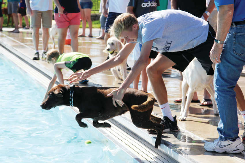 Owners helped their dogs in and out of the pool Sept. 8 as the Pooch Plunge raised money for the Denver Dumb Friends League Buddy Center.