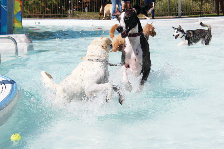 Dogs splash around at the Cook Creek Pool before the pool is drained for the summer. The Wag N' Romp dogs only swim allowed dogs to take a dip to close out the summer Sept. 8.
