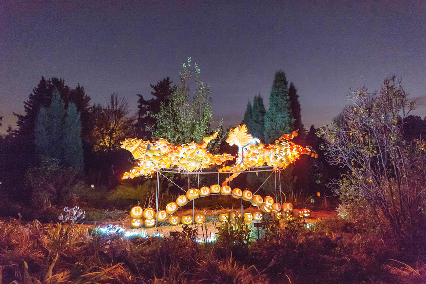 Glow at the Gardens at Denver Botanic Gardens.
