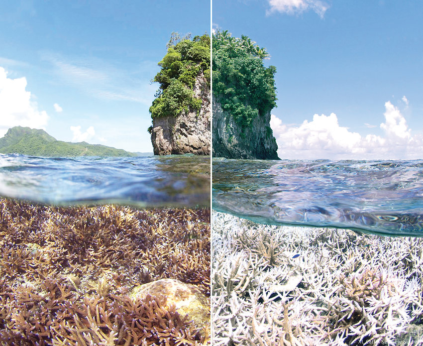 Coral reefs around the world are vanishing at an unprecedented rate.