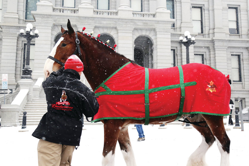 The world-famous Budweiser Clydesdales visited the Colorado Capitol on Dec. 31.
