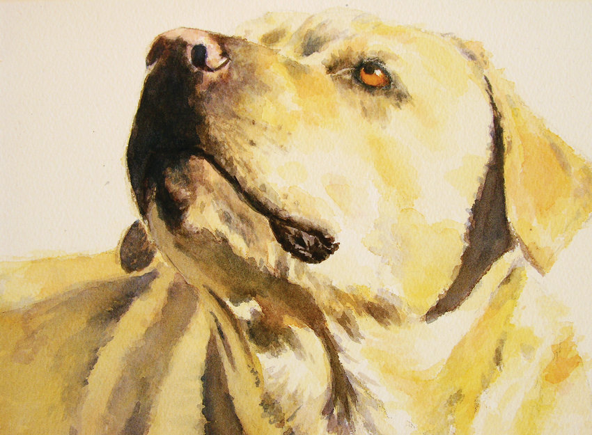 """Loyal-One"" a watercolor, by Pam McLaughlin is included in the exhibit, ""Man's Best Friend: Animal Portraiture"" at the Art Students League Denver."