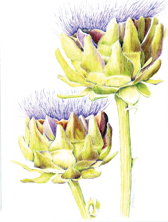 """Two Artichoke Flowers"" by Vanessa Martin is included in the Tangible Terrain exhibit at Town Hall's Stanton Gallery."
