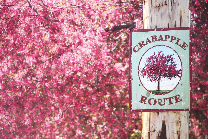 Littleton's Crabapple Route takes visitors along a seven-mile journey through the heart of town to see more than 7,000 flowering crabapple trees.