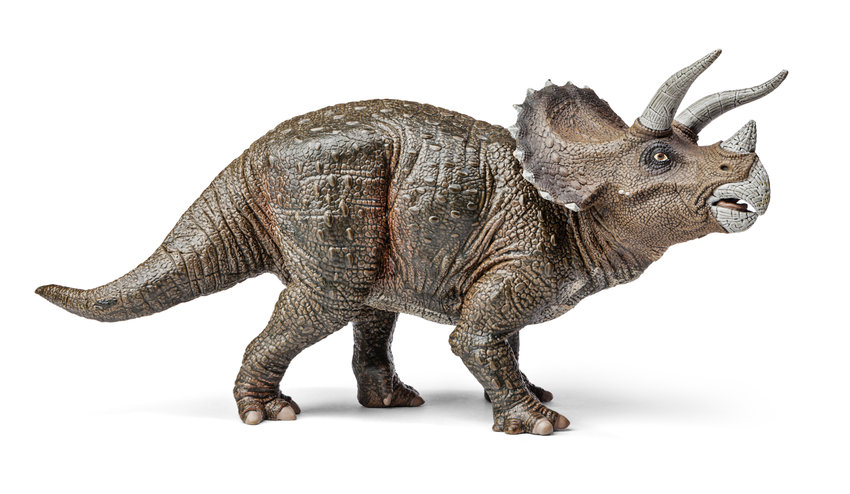 Fossils found in Highlands Ranch are believed to be from a triceratops, a three-horned herbivore that often grew to be 30 feet long and 10 feet tall.