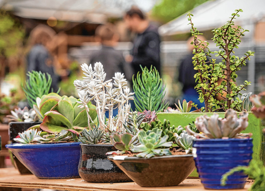Succulents are low maintenance plants, but can also bring texture and variety into your garden space. Succulents can also be potted and kept inside.
