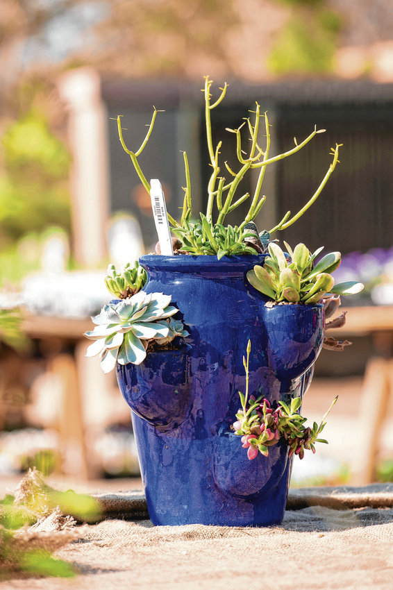 Succulents are low-maintenance plants, but can also bring texture and variety into your garden space. Succulents can also be potted and kept inside.