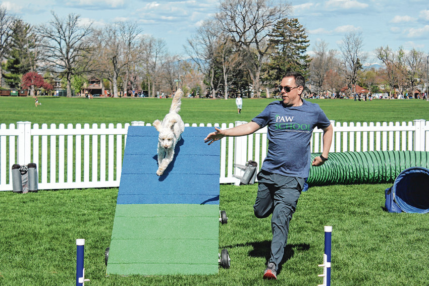 Top left: Sean Cunningham and his dog Lola go through the obstacle course at the Furry Scurry in Washington Park on May 4. The Furry Scurry is an annual event of the Denver Dumb Friends League.