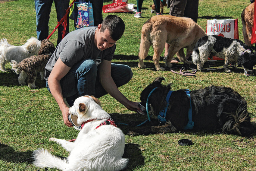 JJ Parker feeds his dogs Daisy and Milo a dog-friendly ice cream treat in Washington Park. The Furry Scurry event this year raised about $720,000 for the Denver Dumb Friends League.