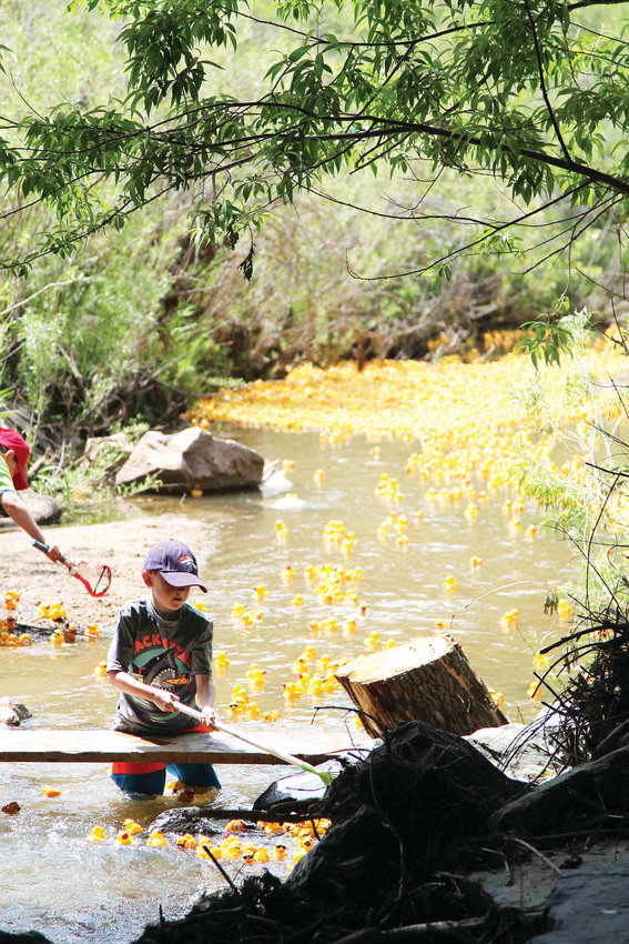 "Rubber ducks flood East Plum Creek in Castle Rock minutes after they are released to ""race"" down the creek."