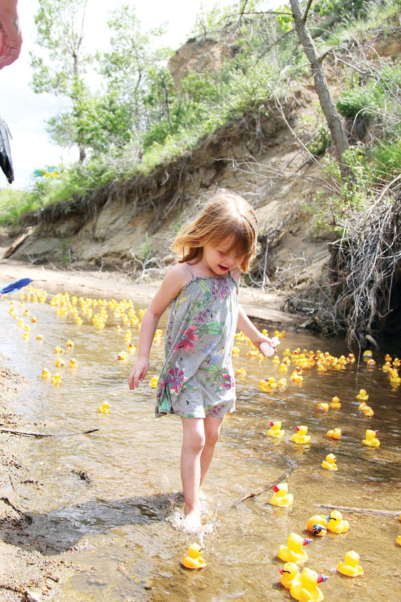 Evelynn Jensen, 4, runs with rubber ducks floating down Plum Creek on June 8 during the annual Ducky Derby event.
