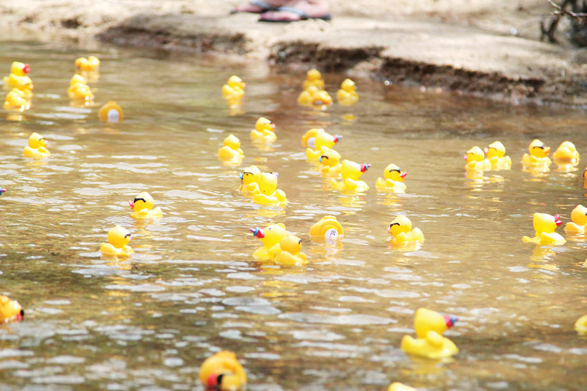 The Ducky Derby is an annual fundraiser for local rotary clubs and popular family event in Castle Rock.