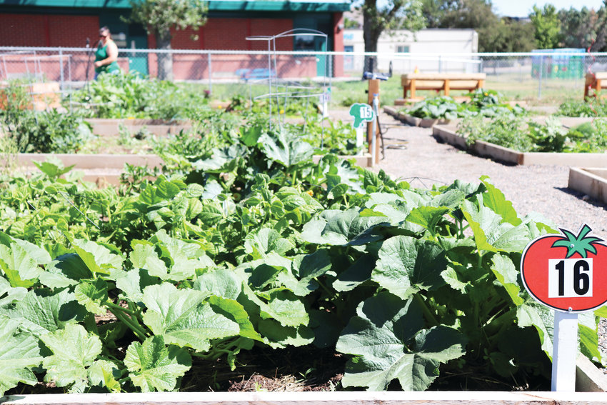 "The Sunshine Community Garden at Arvada WIC, 5150 Allison St. The garden nearly doubled in size this year, now boasting 22 plots ""that are filled with happy families,"" said Meredith Quenzer, public health nutrition supervisor for the Jefferson County Public Health Department."