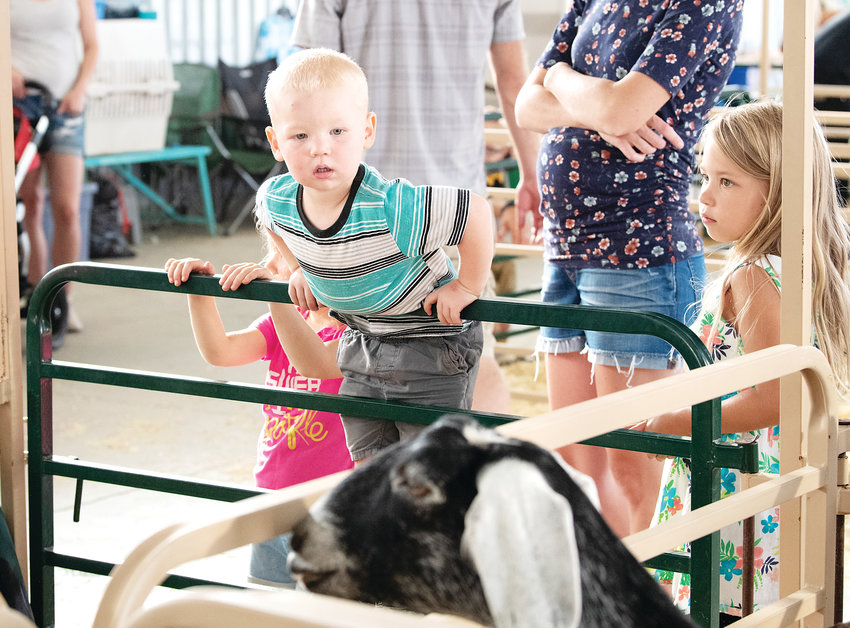 Siblings Lilah, Avery and Owen Hubbard of Lone Tree check out the goat barn.