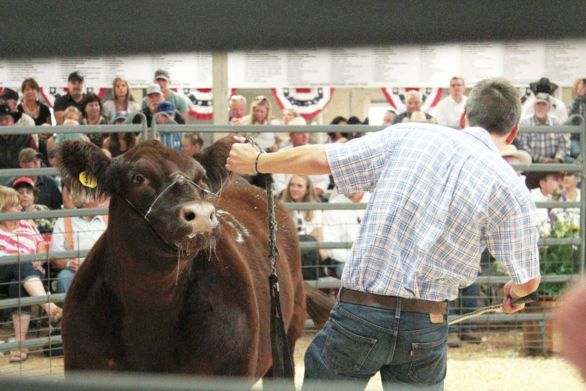 The grand champion steer at the 2019 Jr. Douglas County Livestock Sale sold for $22,000. It was the 60th anniversary of the sale.