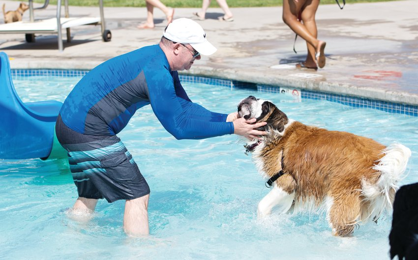 "Chris Padgett, of Thornton, encourages his St. Bernard, ""Molly"", at Thornton's City Pool, during the 12th annual Paws For a Dip splash Aug. 17. Padgett also brought a Newfoundland, who didn't seem to like the water as well as Molly did."
