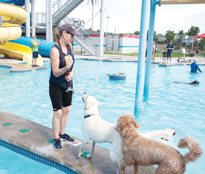 Lory Kreniensieck, of Aurora, prepares to throw a tennis ball to one of her two Labradors, during Thornton's 12th Annual Paws For a Dip dog swim August 17, at City Pool.