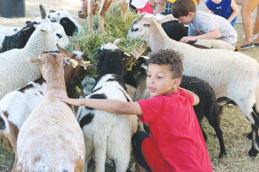 Children pet goats, llamas, sheep, horses and cattle in the petting zoo at Highlands Ranch Pioneer Days. Students from 22 schools attended the event.