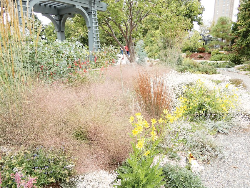 From left, Thinman Indian grass, ruby muhly grass and Standing Ovation grass in the late September landscape at the Denver Botanic Gardens. Often, these types of grasses do not need a lot of maintenance or watering.