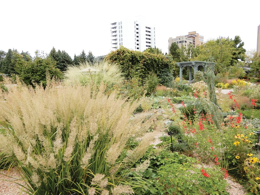 Korean feather grass and Ginat Sacaton grass in the Plant Select garden at the Denver Botanic Gardens. Grasses like these can help extend the life of your garden into the fall and winter.