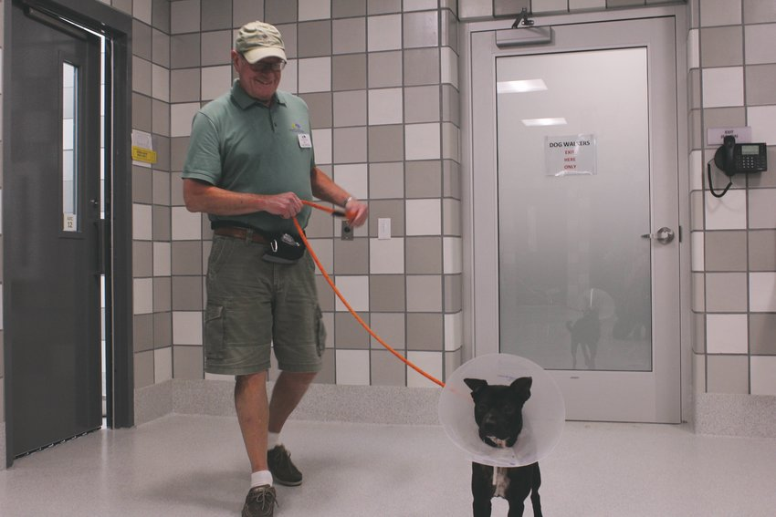 Denver Dumb Friends League volunteer Jim Thoeming gets ready to take one of the shelter's dogs out for a walk. He said that you can tell in a dog's behavior what kind of life it had before coming to the shelter. Some are timid around humans and won't take treats at first.